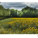 Bernard Delhalle Photographe Lille Nord Paysages